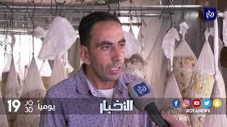 شاب فلسطيني من مدينة جنين ينجح بإنشاء مشروع لإنتاج الفطر المحاري - (4-9-2017)