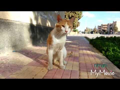 CAT LOVER - THE STREET CAT XXXVII FT. DUMBO ( HAPPY CATS / FUNNY CATS )