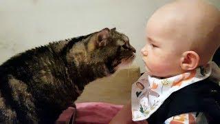 Реакция кота на ребёнка; Cat's reaction to the baby