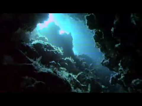 Coral Reefs - Rainforests of the sea