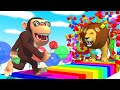 Learn fruits and Animals with funny Monkey 2
