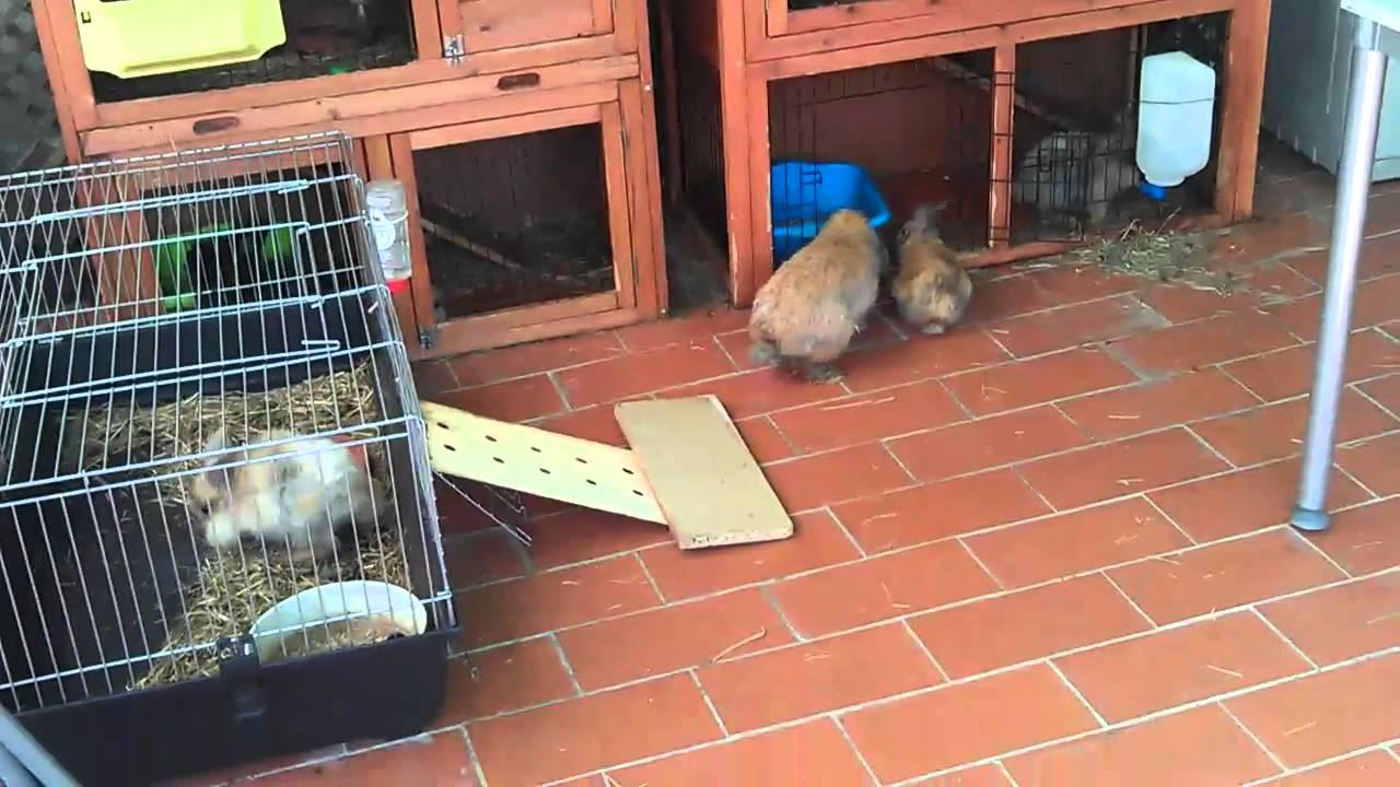 Nuestras jaulas para los conejos enanos youtube for Jaulas para cria de peces