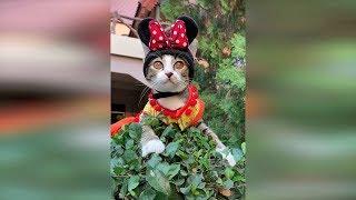 Новые видео про кошек 2019 март, лучшие приколы с животными, очень смешные коты и собаки 2019 #47