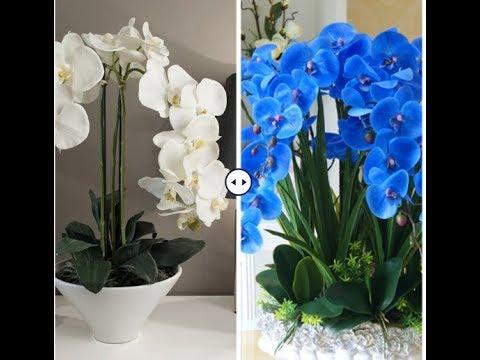 Как покрасить цветы орхидеи в синий цвет видео