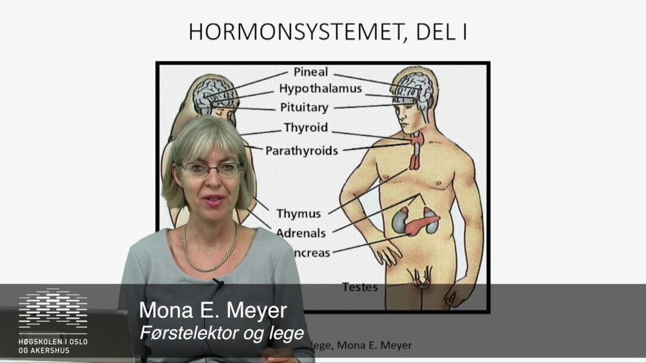 Det endokrine systemet: Hypofysen del1
