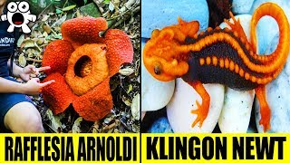 Extraordinary Jungle Discoveries That Are Simply Amazing