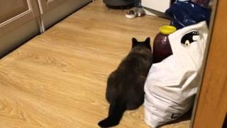 тупой кот