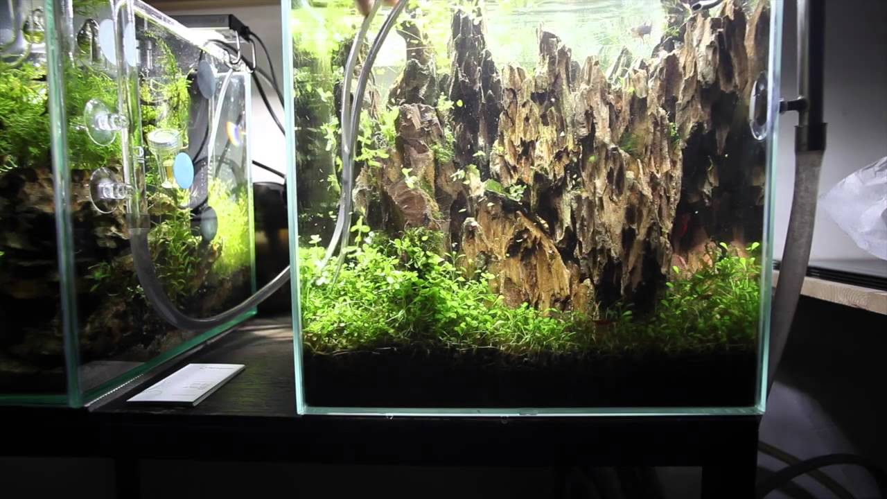 Aquascape Maintenance Nano Lived Planted Aquarium   Betta   YouTube