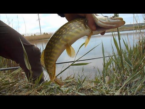 Ловля щуки на пруду весной.4 - YouTube