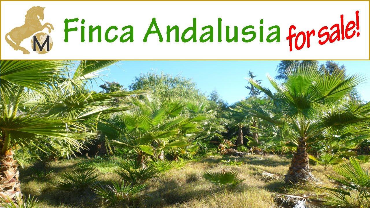 Zu Verkaufen Palmenfinca Grundstuck Altes Haus Andalusien Cadiz