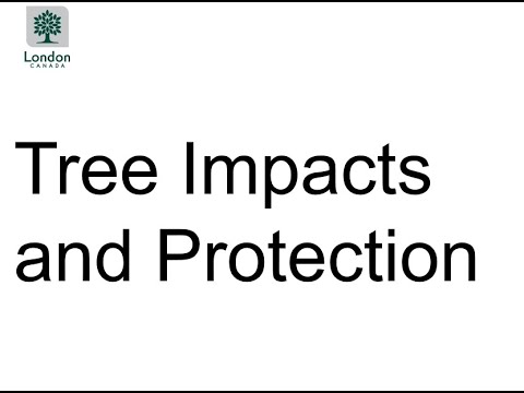 Project Update Meeting: Presentation Three - Information about Tree Impacts and Protection