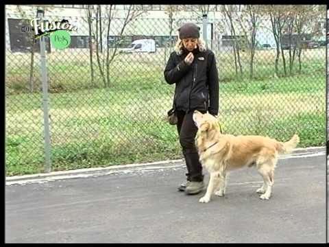 Di.Fusion Pets – Primi passi di educazione canina