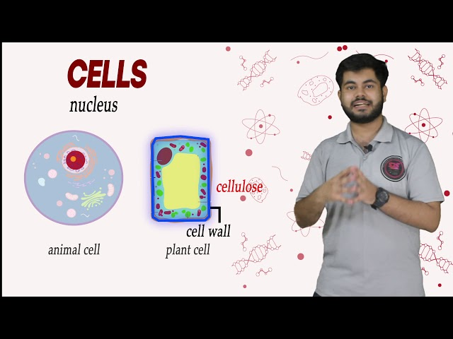 Cell Its Structure and Function Class 9 Biology | CBSE | NCERT