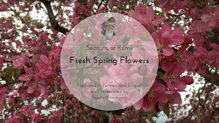 "Seasons of Rumi - ""Fresh Spring Flowers"" - (In Persian and English)"