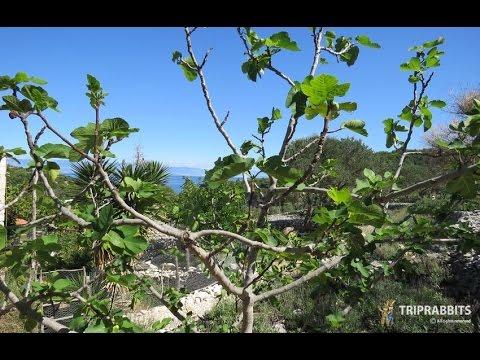Aromatic Garden (Mali Lošinj,Lošinj)