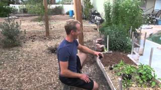 Amazing Garden - Planting Sweet Peppers In Phoenix, Arizona!