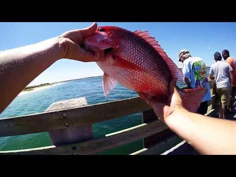 Pier Red Snapper | Pensacola FL