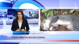 Кошка поселилась на могиле хозяина