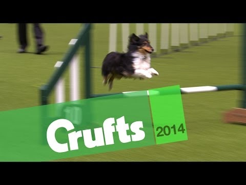 Agility | Jumping | Small Dogs Winner | Crufts 2014