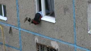 Бухой забыл где вход, лезет в окно