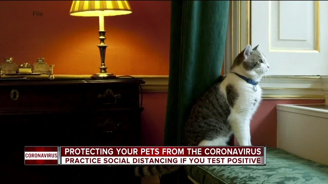 Warning For Pet Owners After 2 Cats Test Positive For Covid 19 Youtube
