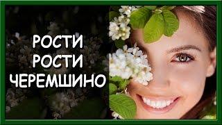 Українські патріотичні пісні  Рости   рости, черемшино
