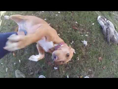 Funny dog playing