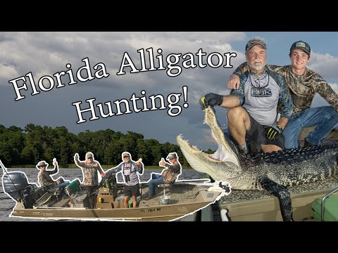 FLORIDA GATOR HUNTING! How To Hunt For Florida Alligator With Beef Lung And Snatch Hook