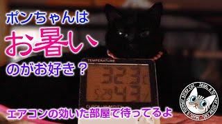 夏の暑い日に何故ポンちゃんは暑い部屋で寝るのか?【Jean & Pont 2200】2020/8/2 #保護猫 #凶暴から甘えん坊へ