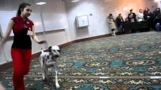 Выставка собак в Ростове-на-Дону 12.02.12