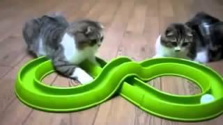 Приколы с животными, кошками, собаками Fun with animals 2