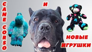 У собаки Кане Корсо новые мягкие игрушки. #canecorso #dogs #собаки
