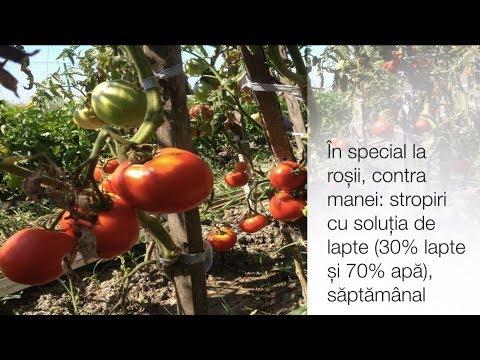 Soluții ecologice la o micro-fermă din Tărtășești