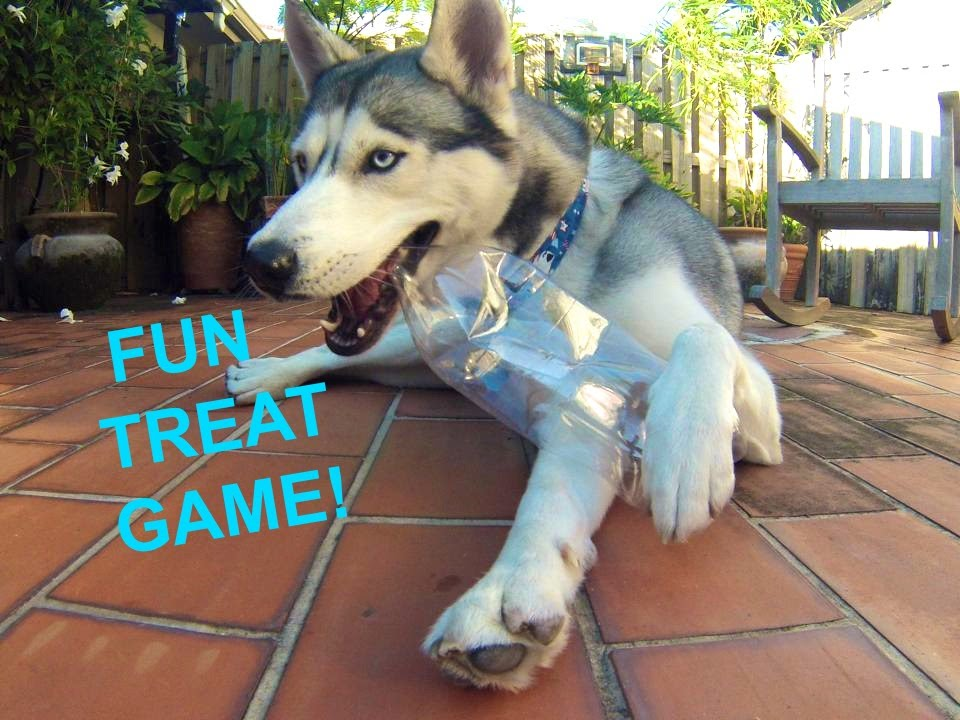 Fun Dog Games For Free