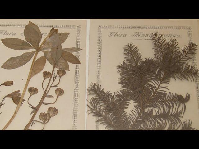 Paradisus Montserratensis: botànica a la Biblioteca de Montserrat