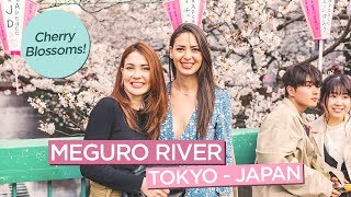 Meguro River Cherry Blossoms + World's Largest Starbucks (and Longest Wait?) in Japan!