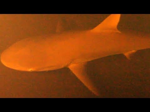 These Scientists Found Sharks Living Inside An Active Underwater Volcano
