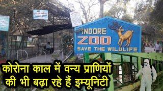 Covid काल में Indore Zoo में वन्य प्राणियों की इम्यूनिटी का भी रखा जा रहा है ध्यान