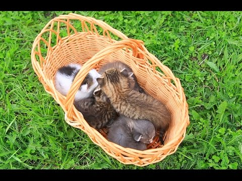 Basket full of meowing kittens