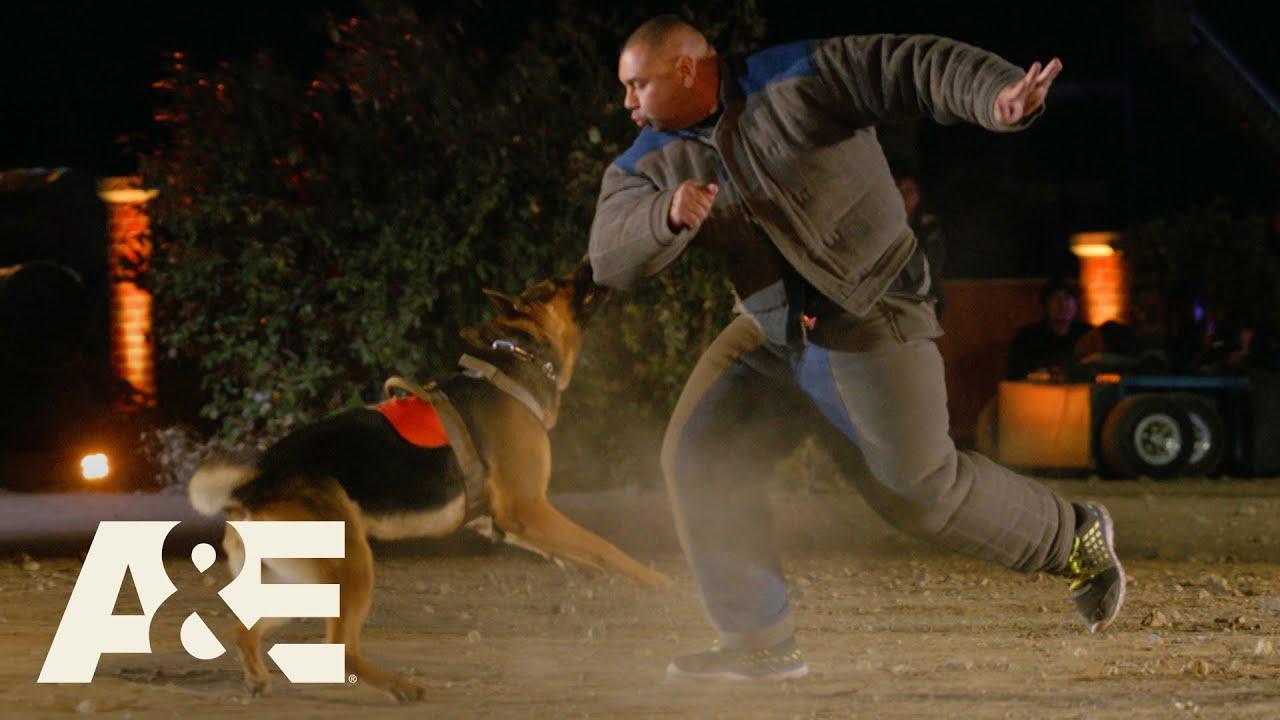 Live PD K9 Kato Takes on Team Bear in Super Close Race | America's Top Dog (Season 1) | A&E