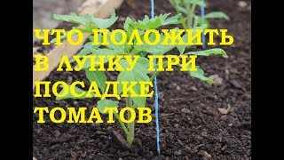 Что необходимо класть в лунку при посадке томатов