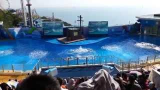 Hong Kong Ocean Park - Ocean Theatre