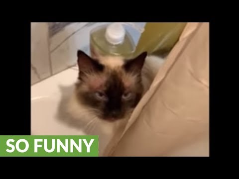 Water-loving cat tries to join owner for shower