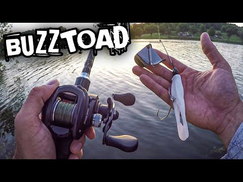 Early Morning Buzzbait Fishing For Bass (War Eagle Buzz Toad Buzzbait)