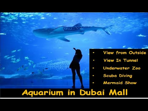 Aquarium in Dubai Mall, Dubai-UAE / Mermaid Show / Scuba Diving with Shark / Under Water Zoo. .