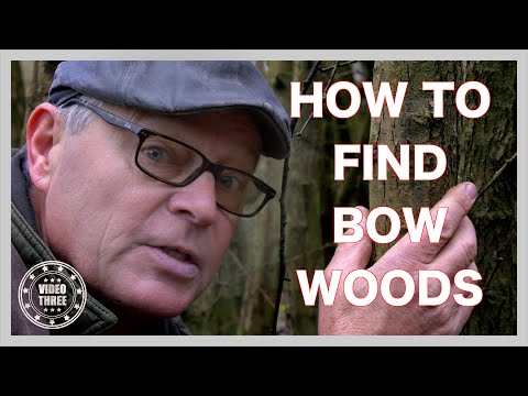 Woods For Archery Bows. I Fell An Ash Tree Sapling. Teach Yourself Bow Making. Part 3
