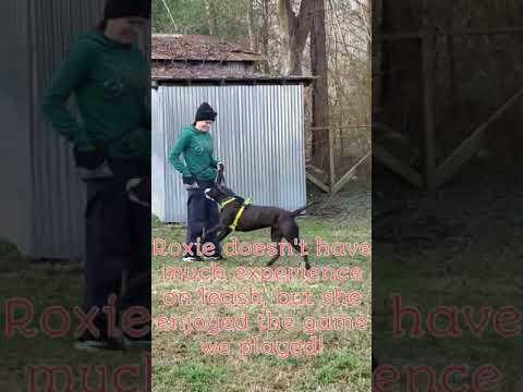 North Carolina Lab Rescue - ADOPTIONS - Rescue Me!