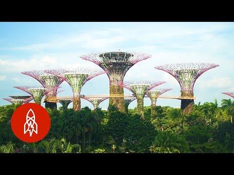 Visit Singapore's Stunning Grove Of Man-Made Trees