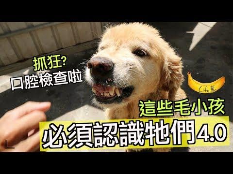 『毛小孩系列』來到嘉義!這救援數百隻狗狗!這些毛小孩,必須認識牠們!4.0