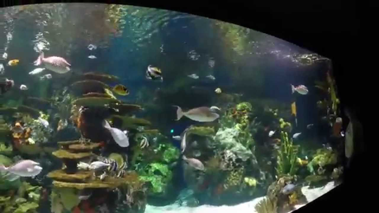 Ripley 39 S Aquarium Swarm Exhibit In Myrtle Beach Youtube